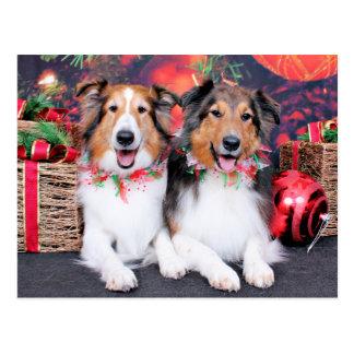 Weihnachten - Zena u. Verpacker - Shelties Postkarte