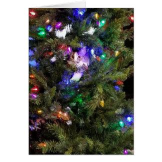Weihnachtsbaum-Miezekatze Karte