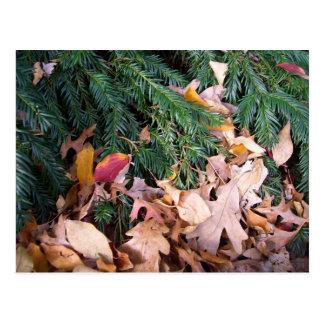 Weihnachtsbaum-Tannen-Immergrün verlässt Postkarte