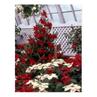 Weihnachtsblumenpostkarte 2 postkarte