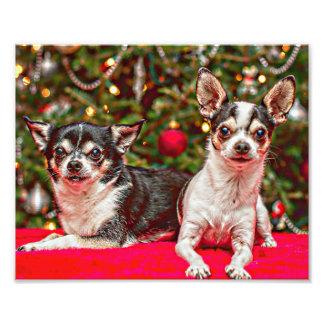 WeihnachtsChihuahua Fotodruck