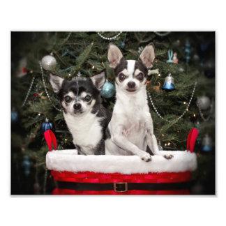WeihnachtsChihuahua in einem roten Korb Fotodruck