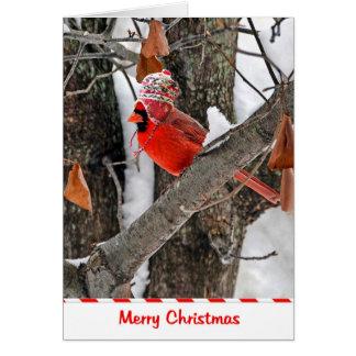 WeihnachtsKardinal Karte