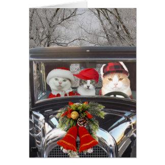 Weihnachtskatzen im Auto Karte