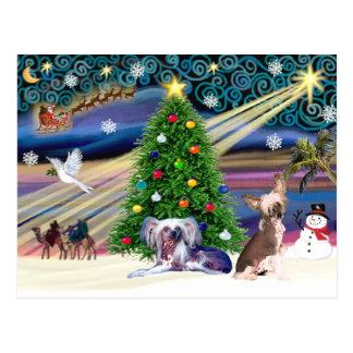 Weihnachtsmagischer Chinese Crested (zwei) Postkarte