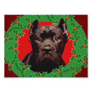 Weihnachtsstock Corso Hund Fotografie