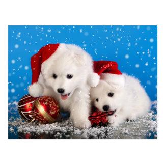 Weihnachtswelpen-weißer SpitzSpitz Postkarten