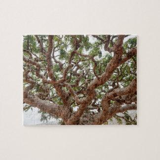 Weihrauch-Bäume, Homhil Hochebene, Socotra-Insel Puzzle