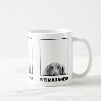 Weimaraner Nation: Weimaraner in einer Kaffeetasse