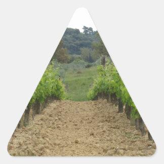 Weinberg im Frühjahr. Toskana, Italien Dreieckiger Aufkleber