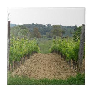 Weinberg im Frühjahr. Toskana, Italien Keramikfliese