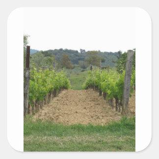 Weinberg im Frühjahr. Toskana, Italien Quadratischer Aufkleber