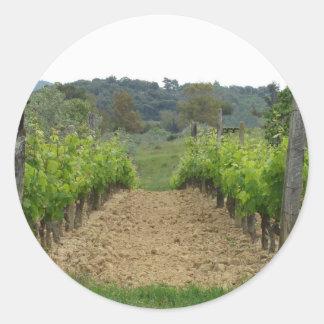 Weinberg im Frühjahr. Toskana, Italien Runder Aufkleber