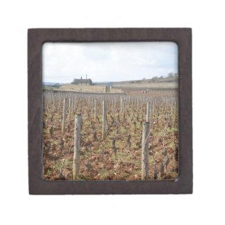 Weinberg in Burgunder Frankreich meursault Kiste