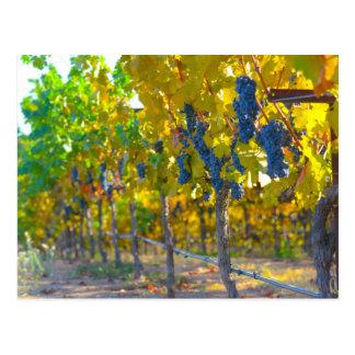 Weinberg in Napa Valley Kalifornien Postkarte