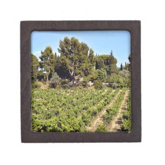 Weinberg von Le Castellet In Frankreich Kiste