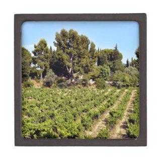 Weinberg von Le Castellet In Frankreich Schachtel