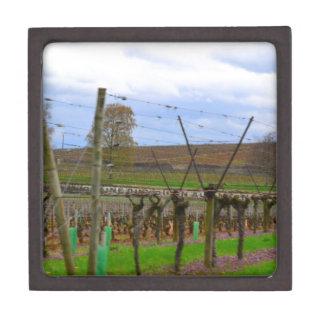 Weinberg, Weinstöcke die französische Landschaft Schachtel