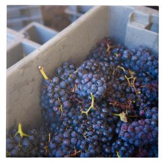 Weinkellerei Bodega Marques de Riscal, Trauben Keramikfliese