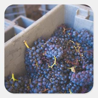 Weinkellerei Bodega Marques de Riscal, Trauben Quadratischer Aufkleber