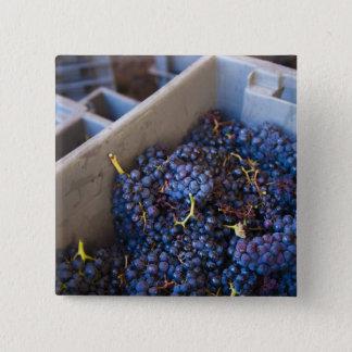 Weinkellerei Bodega Marques de Riscal, Trauben Quadratischer Button 5,1 Cm