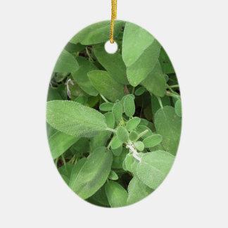 Weise Pflanze im Garten. Toskana, Italien Keramik Ornament