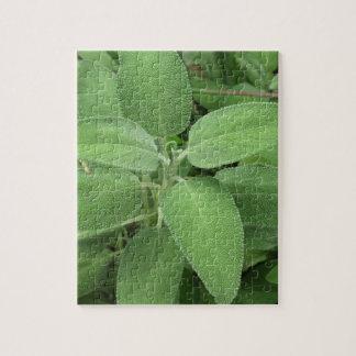 Weise Pflanze im Garten. Toskana, Italien Puzzle