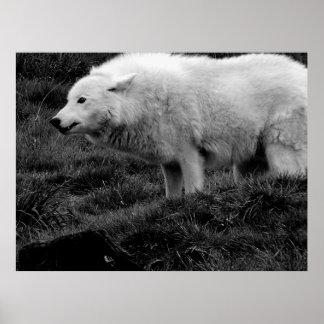 weiser wolf poster