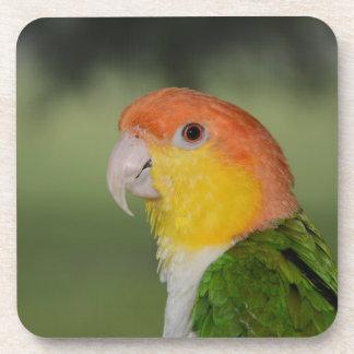 Weiß aufgeblähter Caique-Papagei draußen Untersetzer