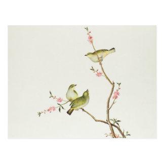 Weiß-Auge Vogel, Ch'ien-Lunge Zeitraum Postkarte