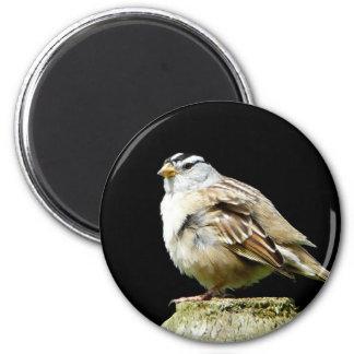 Weiß gekrönter Lied-Spatz Runder Magnet 5,7 Cm