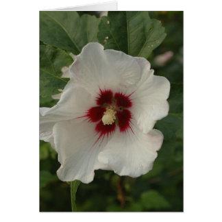 Weiß-Rose von Sharon (Blume) Karte