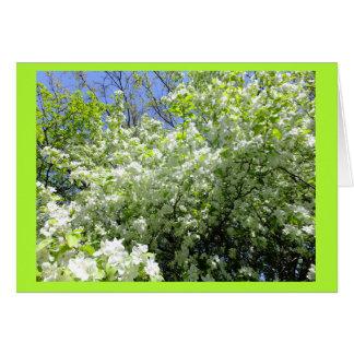 Weißdorn-Baum in der Blumen-Raum-Anmerkungs-Karte Karte