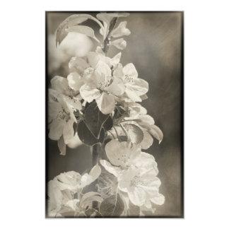 Weiße Apple-Blüten-Blumen-rustikaler Blumenbaum Fotodruck