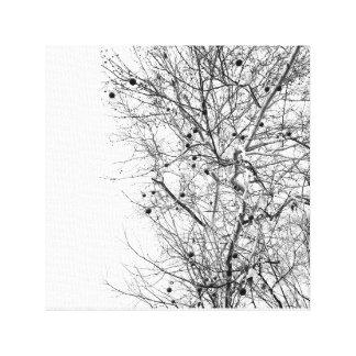 Weiße Barke säte Nussbaum-Natur-Foto xild xhild Leinwanddruck