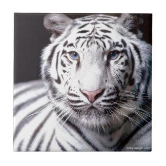 Weiße bengalische Tiger-Fotografie Keramikfliese