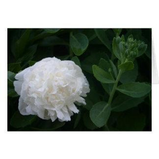 Weiße Blume Karte