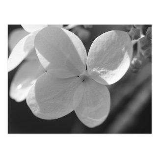 Weiße Blume Postkarten
