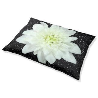 Weiße Blume unter Dewdrops Haustierbett