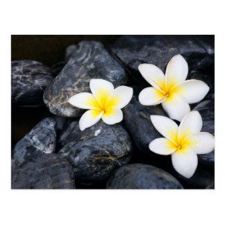 Weiße Blumen auf den schwarzen Steinen Postkarte