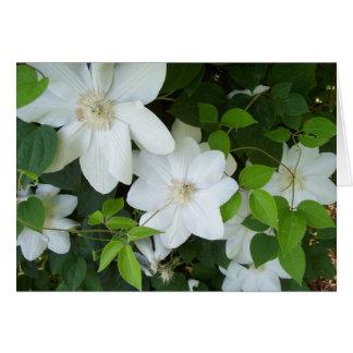 Weiße Blumen auf Rebe Grußkarte