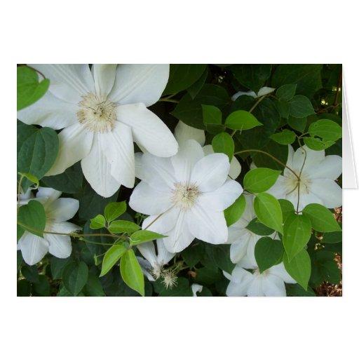 Weiße Blumen auf Rebe Karten
