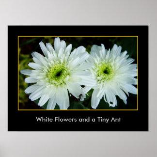 Weiße Blumen und eine kleine Ameise Poster