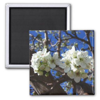 Weiße Blüte gruppiert sich Frühlings-blühenden Quadratischer Magnet