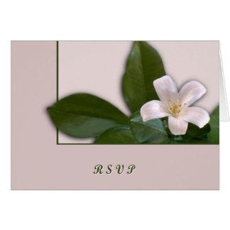 Weiße Blüte Karte