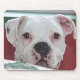 Weiße Boxer-HundeFoto-Mausunterlage Mousepad