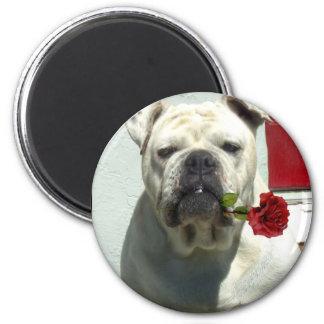 Weiße Bulldogge mit Rosenmagneten Runder Magnet 5,7 Cm
