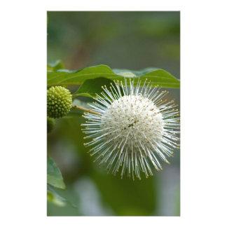 Weiße Buttonbush Wildblume Briefpapier