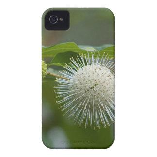 Weiße Buttonbush Wildblume iPhone 4 Hüllen