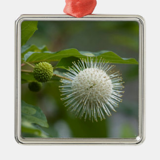 Weiße Buttonbush Wildblume Silbernes Ornament